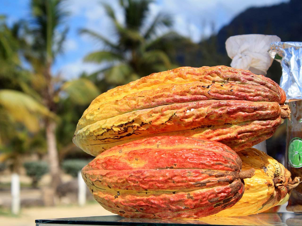 cacao-manta-tour1