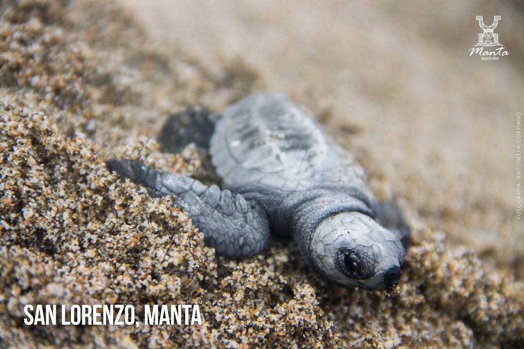 san lorenzo beach near Manta