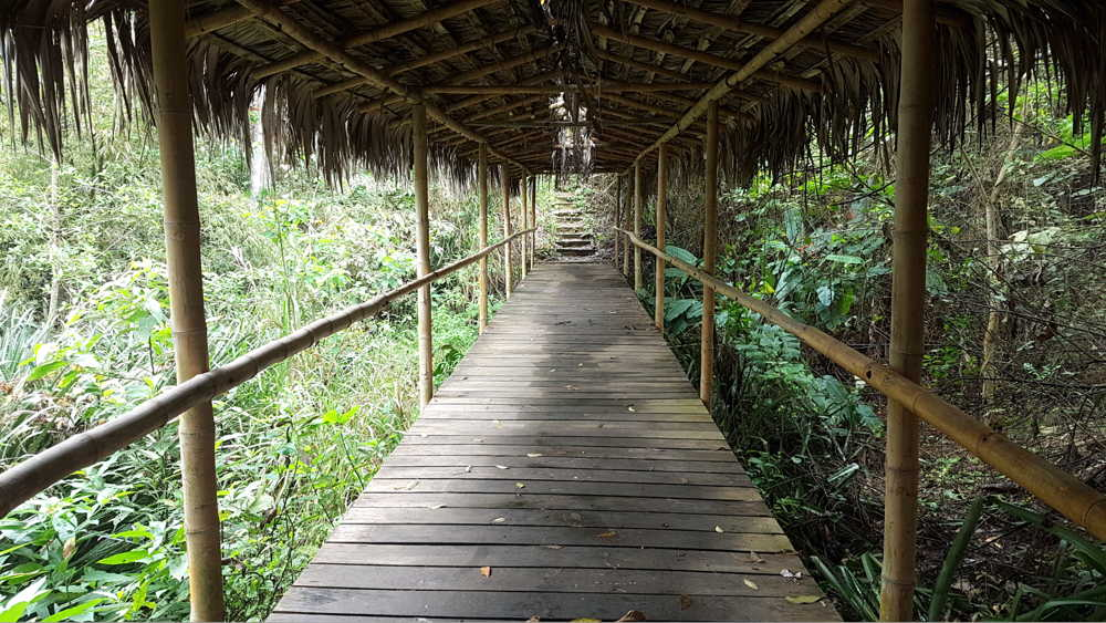 pacoche manta ecuador rainforest