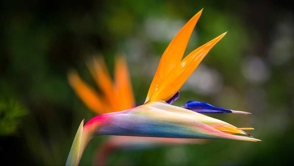 pacoche manta flower