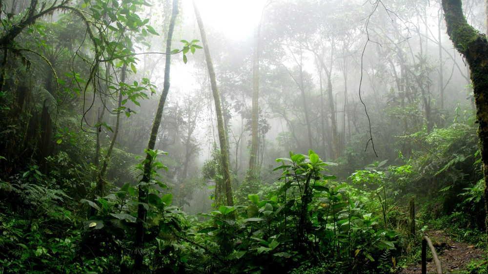 pacoche rainforest