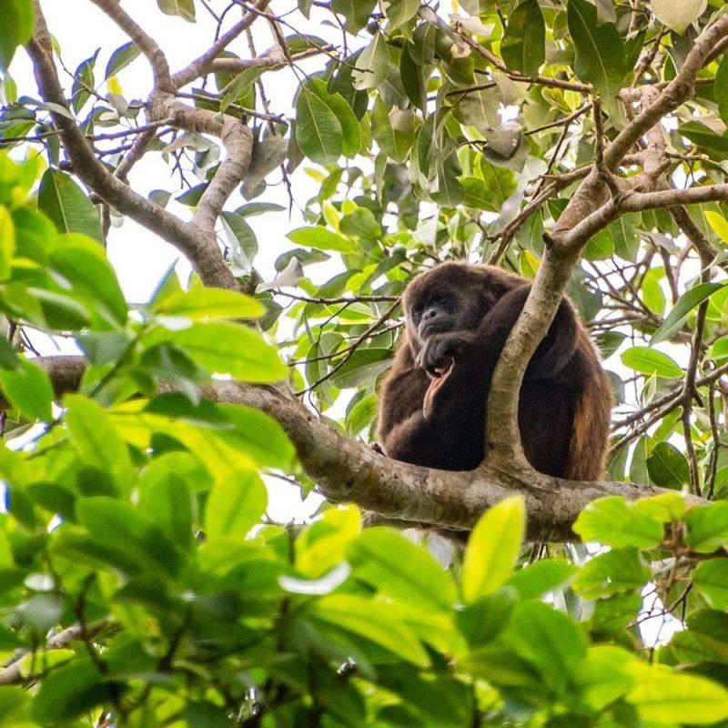 manta ecuador monkeys